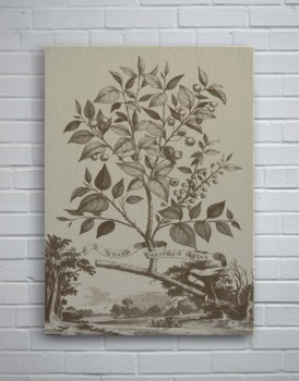 Muntings Tree-Botanical and Floral