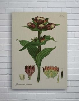 H Andrews Fleur Purple-Botanical and Floral