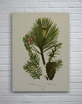 Pine Cone and Foliage-Botanical and Floral