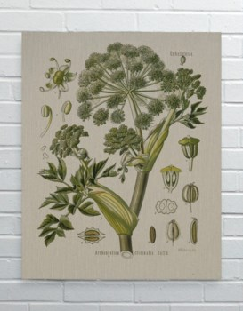 Dill-Floral and Botanical