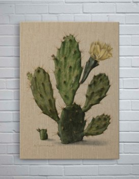 Cactus Small-Botanical and Floral