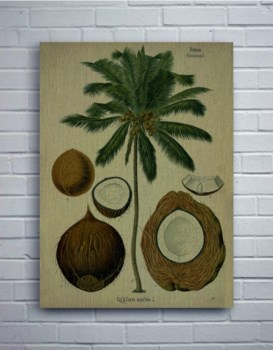 Coconut Palm Tree-Coastal and Tropical