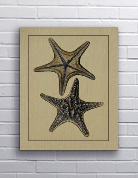 Antique Blue Starfish II-Coastal and Tropical