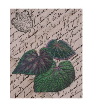AR Leaves Composite II-Floral and Botanical