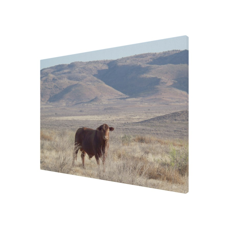 Bull and Mountains