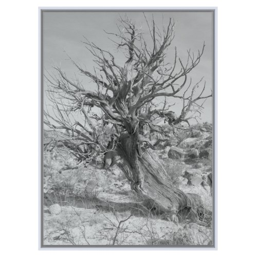 Cedar Tree black and white