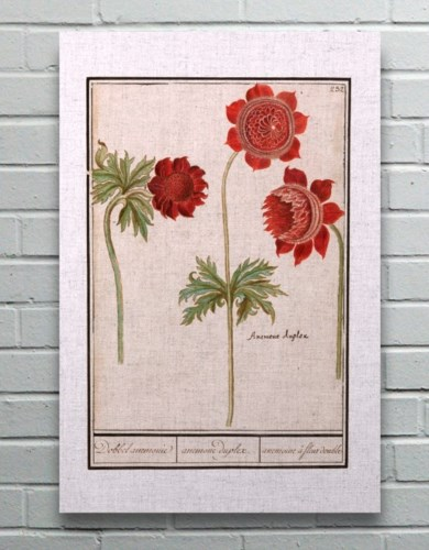 Anenome Duplex-Floral and Botanical