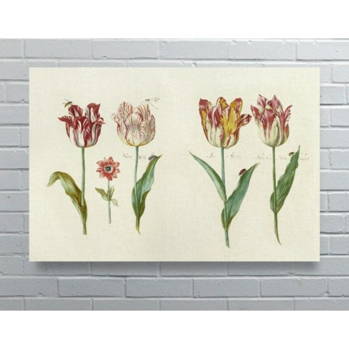 4 Tulips-Floral and Botanical
