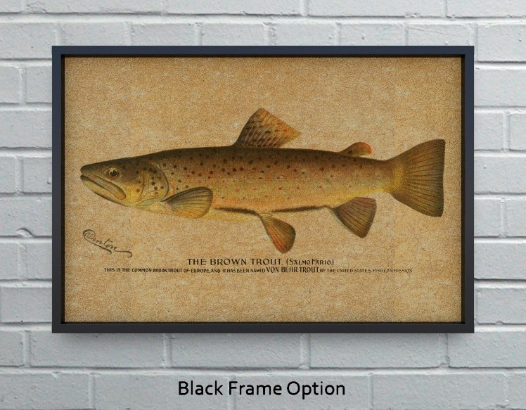 Brown Trout hemp art-Animals and Nature