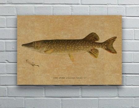 Pike hemp art -Animals and Nature