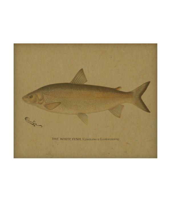 White Fish hemp art