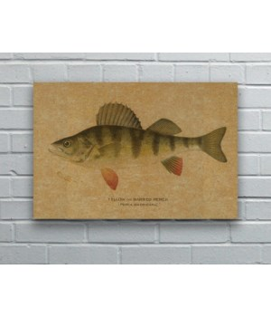 Yellow Barred Perch hemp art