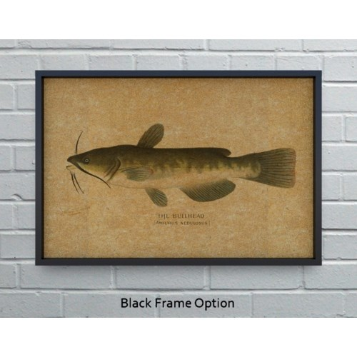 Bullhead Catfish hemp art