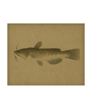 Bullhead Catfish hemp art
