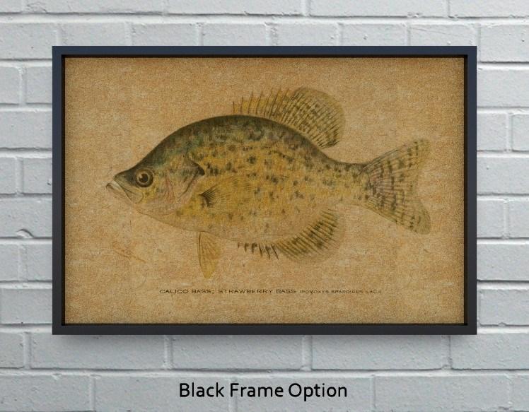Calico Bass hemp art-Animals and Nature