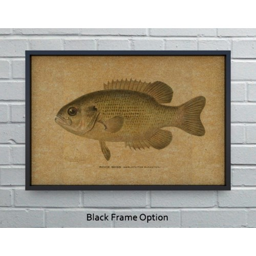 Rock Bass hemp art
