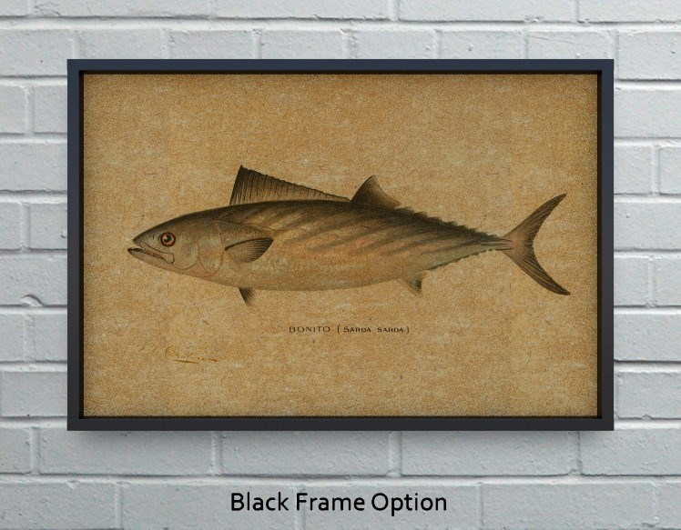 Bonito hemp art-Animals and Nature