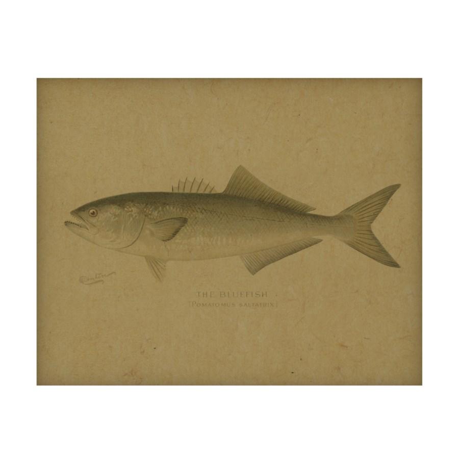 Fish V hemp art