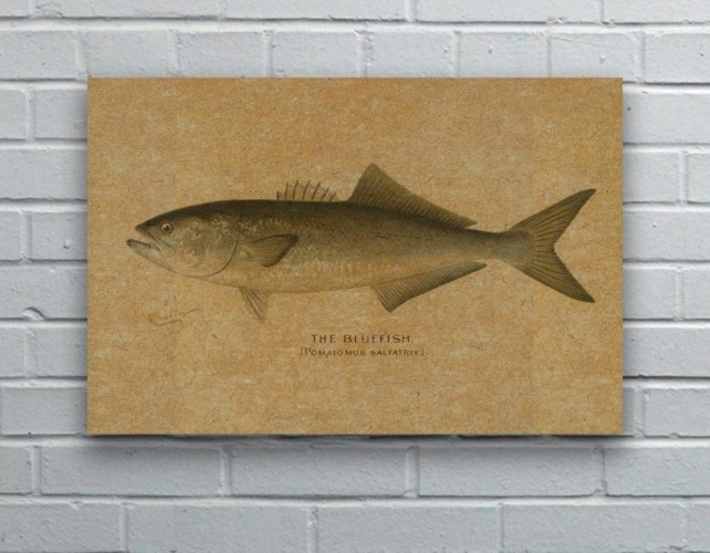 Fish V hemp art- Animals and Nature