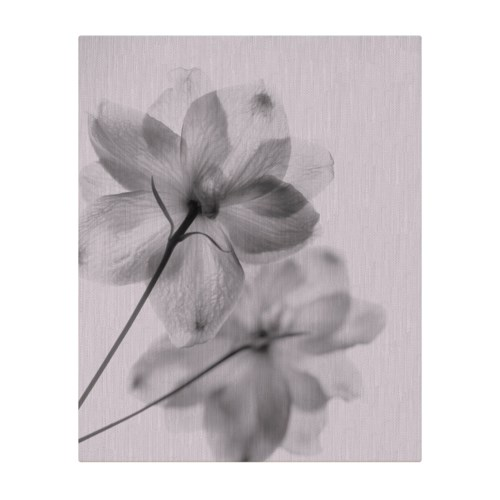 Floral I X-Ray-Floral and Botanical