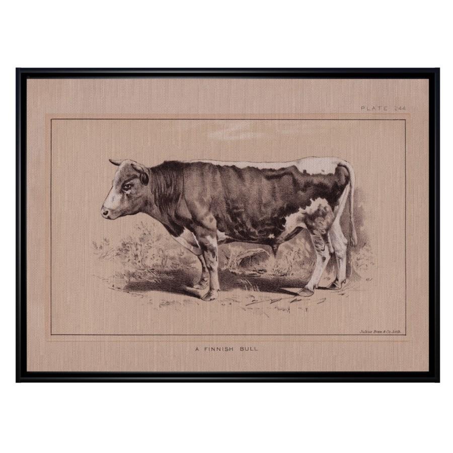 Finnish Bull