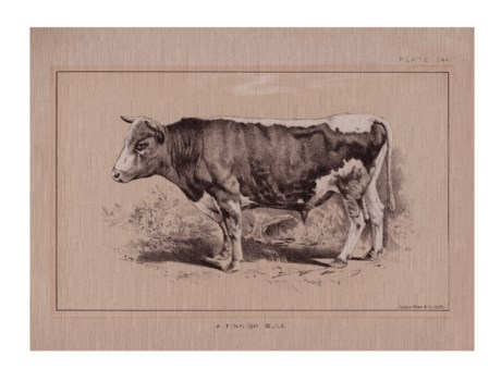 Finnish Bull-Animal