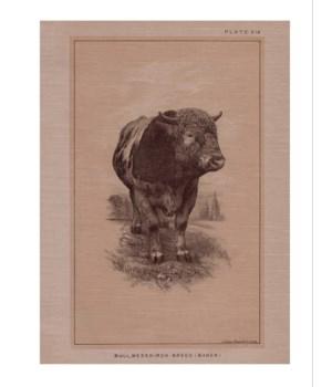 Bull Messkirch-Animal