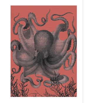 Octopus III Full gray with coral background -Coastal