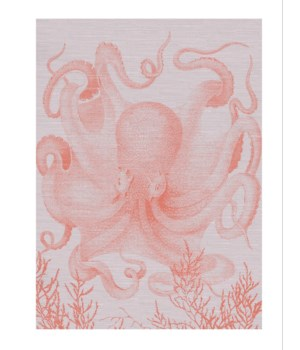 Octopus III full coral with white background -Coastal