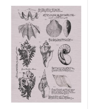 Shell Drawings -Coastal