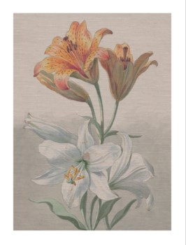 Tiger Lilly -Botanical