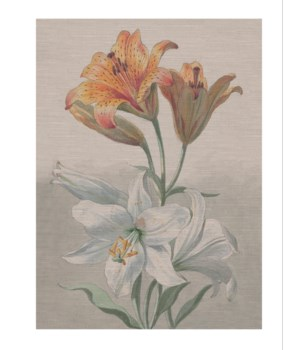 Tiger Lilly -Botanical