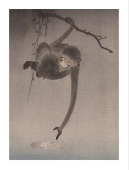 Water Reflection Monkey -Animal