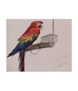 Parrot on Perch -Animal