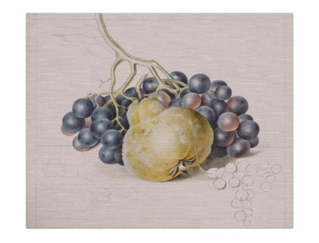 Pear and Grapes -Botanical