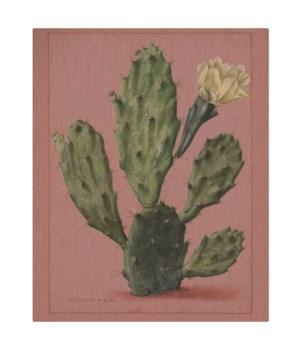 Cactus on coral background -Botanical