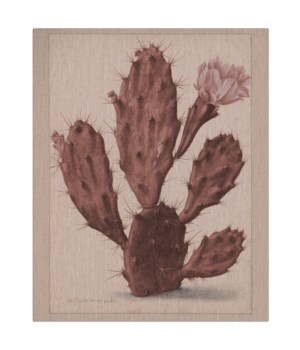Coral cactus -Botanical