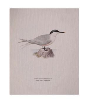 Shore Bird I-Animal