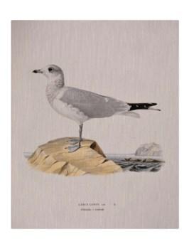 Shore Bird II-Animal