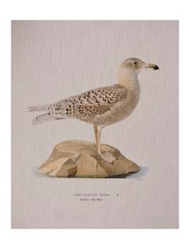 Shore Bird III-Animal
