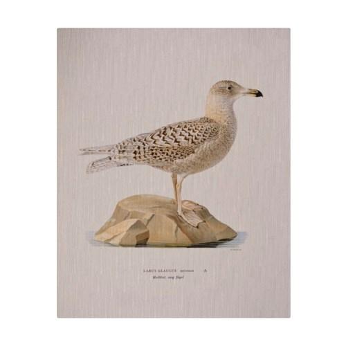 Shore Bird III