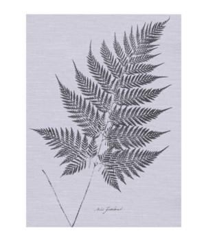 Fern - Botanical