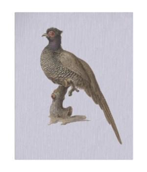 Pheasant - Animal