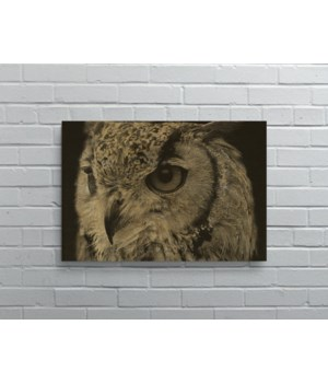 Owl II-Animals