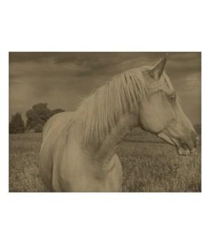Horse in a field 01