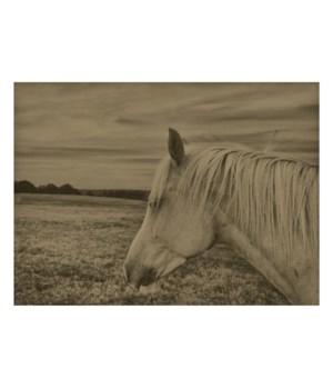 Horse in a field 02