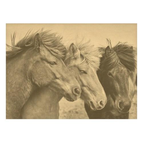 Three horses in a field