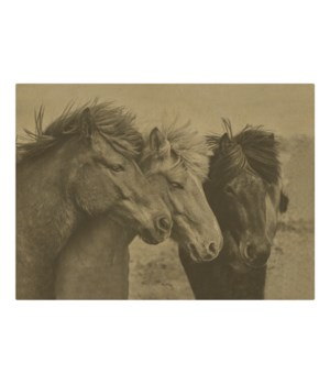 3 horses in a field