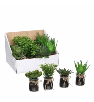 Succulent in pot green 4 assorted pdq  - h11xd5,5cm