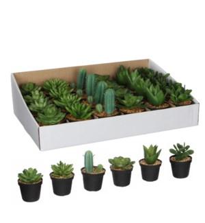 Succulent in plastic pot green 6 assorted pdq - h11xd7cm
